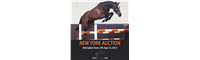 OnlyJumpers Auctions