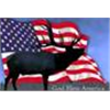 Discounted US Semi-Guided and Guided hunts with and without lodging