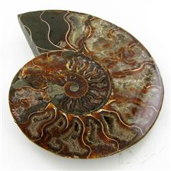 1910ct Opalized Crystalized Lg Ammonite Cut Half (MIN-000006)