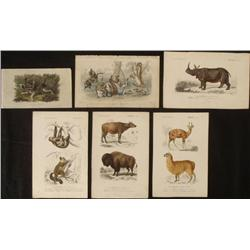 6 Antique Wildlife Book Plate Prints Rare Attacking