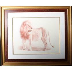 Original drawing in sinopia entitled Lion  Tanzania by noted wildlife artist John  Banovich, signed