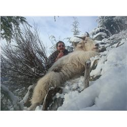 7-day mountain goat hunt for one hunter in British Columbia