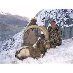 7-day Himalayan Ibex hunt for one hunter in Pakistan - includes trophy fees for any size ibex