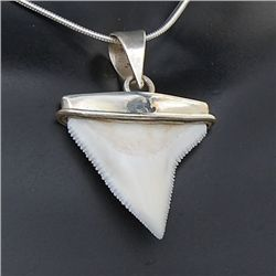 Shark Ivory & Sterling Necklace Earrings (JEW-195)
