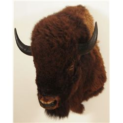 Huge Buffalo Taxidermy Mount Jonas Brothers