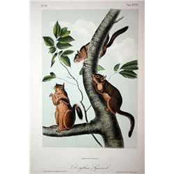 Audubon Original Planeography by Hitchcock