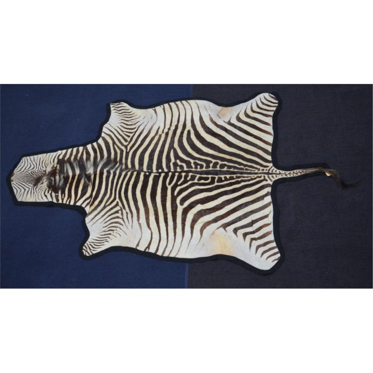 Large Zebra Skin Rug Approx. 5 Feet By 8 Feet In Overall