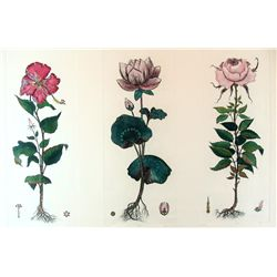 FLORALS HAND COLORED ETCHINGS LTD ED SIGNED
