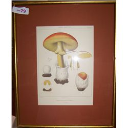 MUSHROOMS Vintage Print unsigned 17.5 T x 22W