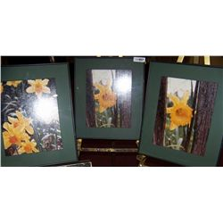 (3)Piece Art Photography framed Lot depicting Daffodils