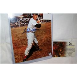 TED WILLIAMS AUTOGRAPHED sleeve With C.O.A from GLOBAL Sports
