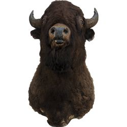 Stuffed Buffalo Head Wall Mount