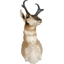 Pronghorn Stuffed Antelope Head