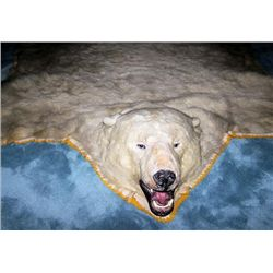 Polar Bear rug, approximately 100 years old