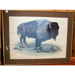 Framed Picture Buffalo, by R Dorman