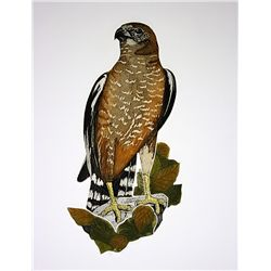 Rickson Hand Signed and Numbered Lithograph - Hawk