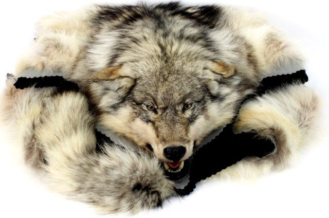 Fantastic Wolf Rug Mounted By Curtis Taxidermy Of Montana, Mounted On  Double Layer Felt Pads. Loading Zoom