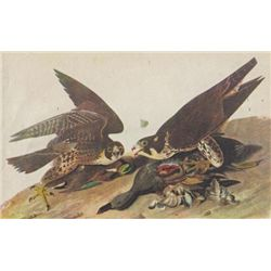 John James Audubon Circa 1946 DUCK HAWK MATTED PRINT T
