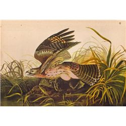 John James Audubon Circa 1946 ~ Red Shouldered Hawk