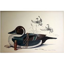 Hand Signed and Numbered Original Lithograph by James Fisher - Pintail