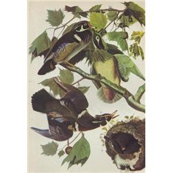 John James Audubon Circa 1946 WOOD DUCK MATTED PRINT T