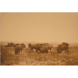 "L.A. Huffman, Buffalo Grazing the Big Open 1880's, BWC,  14 1/8"" x 9 1/8"""