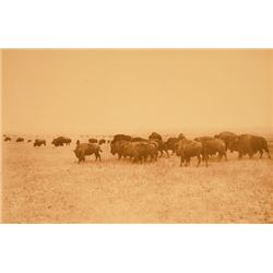 "L.A. Huffman, Bison Grazing the Big Open in Northern Montana, BWC, 1882, 14 1/8"" x 9 15/16"""