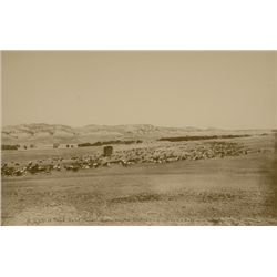 "L.A. Huffman, A Trail Herd, Powder River, #226, Collotype, 100% rag book mats, 1886, 15 7/16"" x 10"""