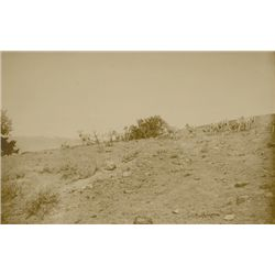 """L.A. Huffman, Mountain Sheep at Timberline, Sepia, 14 1/8"""" x 9 1/8"""""""