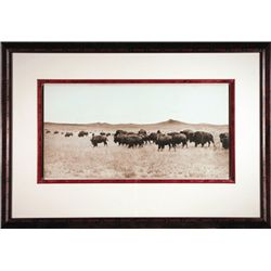"L.A. Huffman, Bison Grazing the Big Open, Collotype, 1882, 3 3/4"" x 5 3/8"", framed"