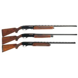 Three Winchester Shotguns