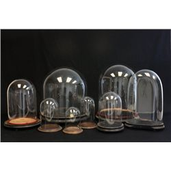 Group lot of 8 glass domes with bases