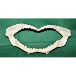 Sun bleached sharks jaws