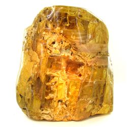 10550ct Natural Peru Amber Rough HUGE w/Insects! (MIN-000948)