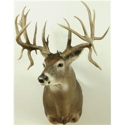 21 Point Whitetail Deer Mount