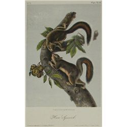 John James Audubon, Lithograph
