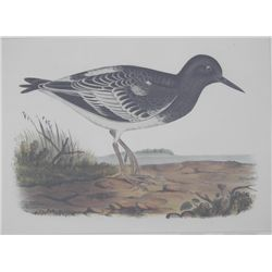 Birds Lithograph