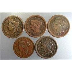 ( 5 ) AVERAGE CIRCULATED U,S, LARGE CENTS, NICE READABLE DATES