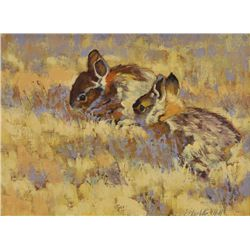 Barbara Luebke Hill - Baby Bunnies