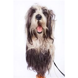 SCREEN-USED ANIMATRONIC SHEEPDOG FROM THE SHAGGY DOG