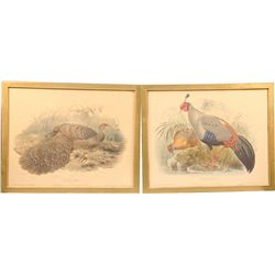 Lot of 2 Bird Prints in Frames: