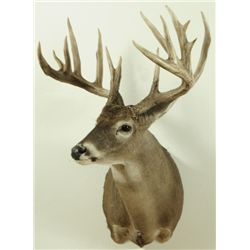 16 Point Whitetail Deer Mount