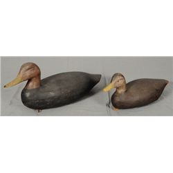 2 Hand Carved Black Duck Decoys
