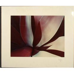 Allan Bruce Zee Homage to O'Keeffe Art Print Flower