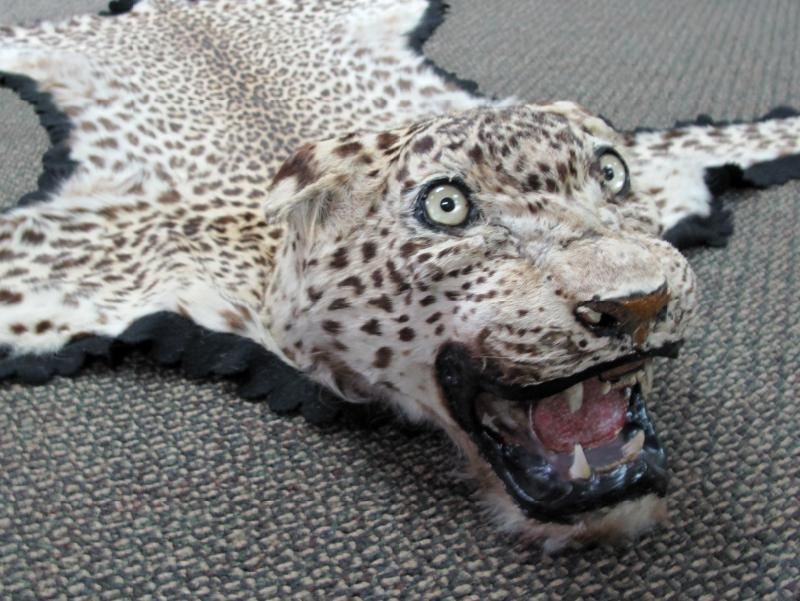Image 4 Leopard Skin Rug Full Head Mount