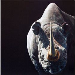 """Disappearing Rhino"" Original scratchboard drawing by Sally Maxwell"