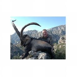 3-day Gredos or Southeastern ibex hunt for one hunter in Spain - includes trophy fees