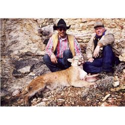 7-day Mountain Lion Hunt for 1 Hunter in Chino Valley, AZ