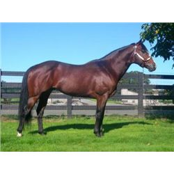 Awesome Ta First - 2002 Bay AQHA Stallion