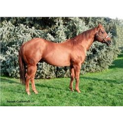 BR Proudest Victory - 1997 Sorrel AQHA Stallion